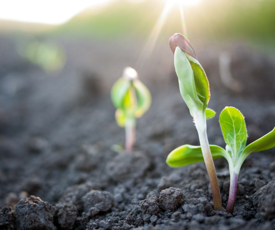 Importance of Sowing and the Benefits of Reaping